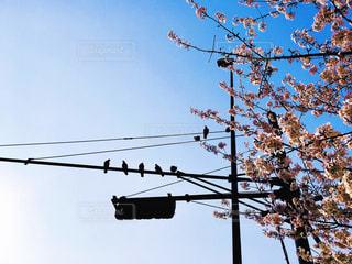 ワイヤーの上に座って鳥の群れの写真・画像素材[1236425]