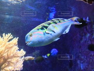 カラフルな魚の写真・画像素材[2720783]
