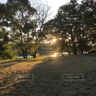 野原の大きな木の写真・画像素材[2713561]