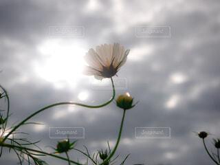 花のクローズアップの写真・画像素材[3771288]