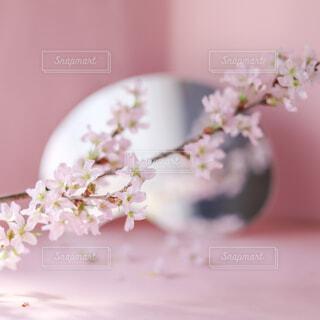 おうちで花見の写真・画像素材[4258593]