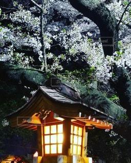 桜の季節は儚くて・・の写真・画像素材[2568969]