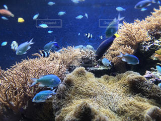 水族館の魚の写真・画像素材[2569133]