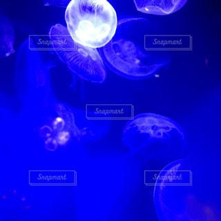 青色の世界の写真・画像素材[2569147]