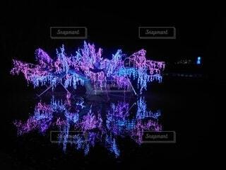 光の桜の写真・画像素材[3908495]