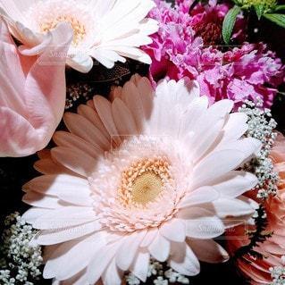 花をクローズアップするの写真・画像素材[2879560]