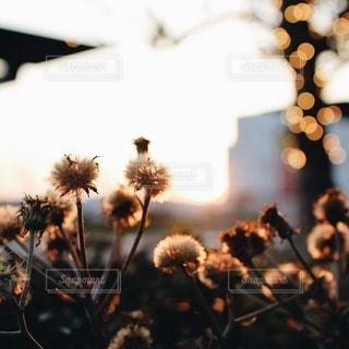 自然の写真・画像素材[25653]