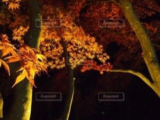 秋の写真・画像素材[2571817]