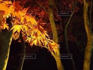 秋の写真・画像素材[2571818]