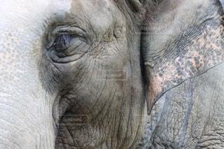 動物園ゾウの写真・画像素材[2572512]
