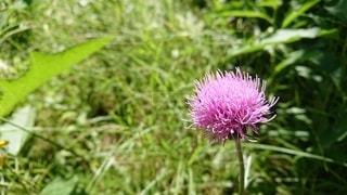 花の写真・画像素材[2613442]