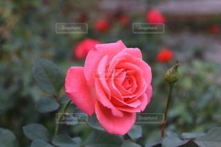 10月の花①の写真・画像素材[2645644]
