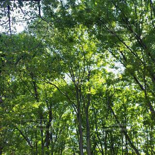 森林の写真・画像素材[3753116]