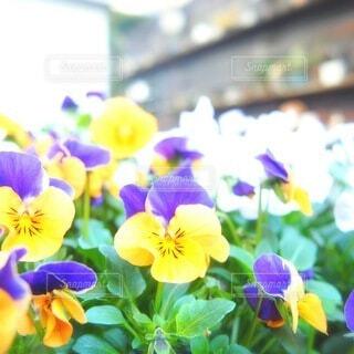 庭の花たちの写真・画像素材[3760165]