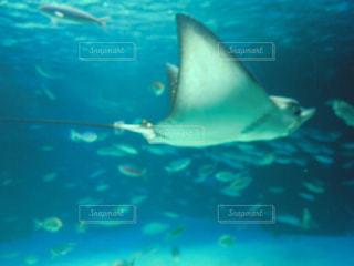 水の下で泳ぐ魚の写真・画像素材[2872389]