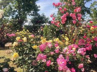 花の写真・画像素材[2589332]