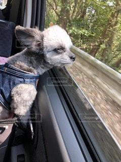 犬の写真・画像素材[2626198]