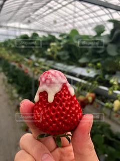 果物を持つ手の写真・画像素材[2993627]