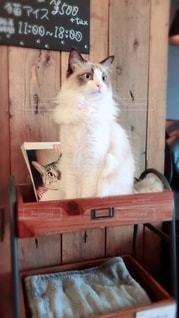 猫の写真・画像素材[2581087]