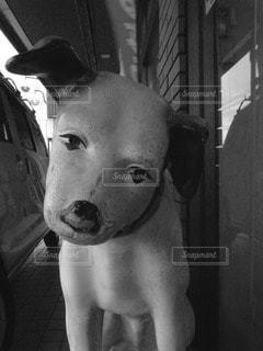 犬 - No.50952