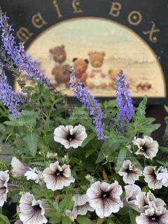 ペイントしたポストと寄植えの花の写真・画像素材[4407117]