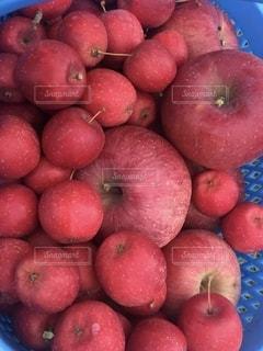実りの秋!りんごの写真・画像素材[2588322]