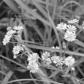 花の写真・画像素材[2767137]