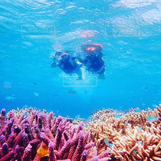 宮古島、珊瑚礁の海でシュノーケルの写真・画像素材[2587395]