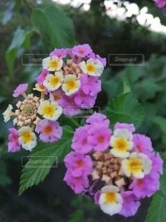 花のクローズアップの写真・画像素材[3782512]