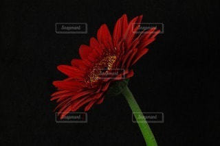 花の写真・画像素材[100373]