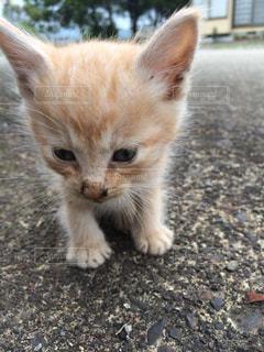 子猫の写真・画像素材[2589813]