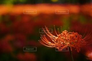 花の写真・画像素材[2590572]