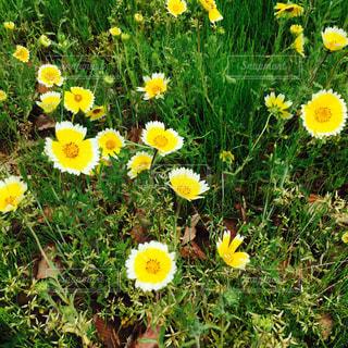 お花畑の写真・画像素材[2600011]