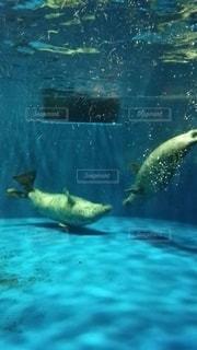 動物の写真・画像素材[2626388]
