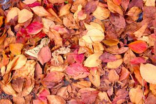 秋の写真・画像素材[2646648]