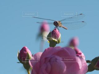 花とトンボの写真・画像素材[2594056]