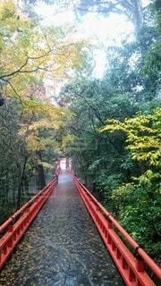 森の川に架かる長い橋の写真・画像素材[2699042]