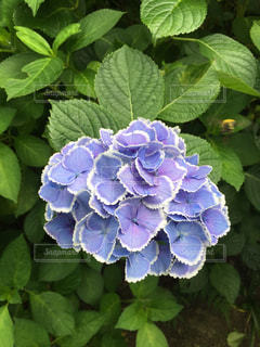 花の写真・画像素材[2618280]