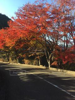 道路脇の木の写真・画像素材[2741462]