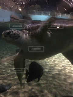 ウミガメの写真・画像素材[2868893]