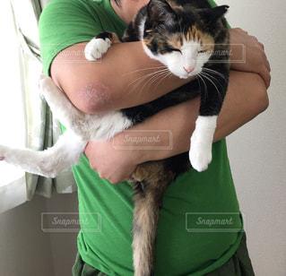 猫をかわいがっている人の写真・画像素材[3076737]