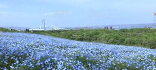 大きな緑の畑の写真・画像素材[3087843]