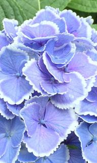 花のクローズアップの写真・画像素材[3092842]