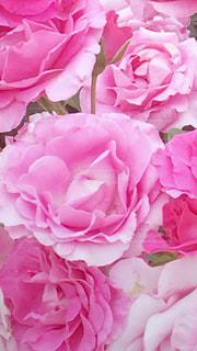 花のクローズアップの写真・画像素材[3095035]