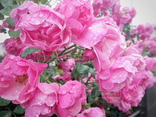 花のクローズアップの写真・画像素材[3215548]