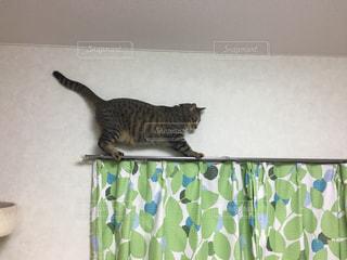 カメラを見ている猫の写真・画像素材[3239528]