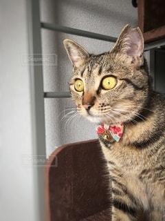 カメラを見ている猫の写真・画像素材[3340765]