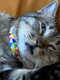 猫のクローズアップの写真・画像素材[3633553]