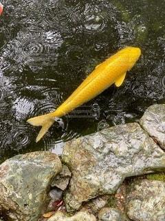 水の下で泳ぐ魚の写真・画像素材[3670667]