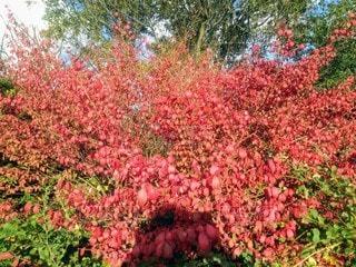 秋の紅葉の写真・画像素材[2697136]